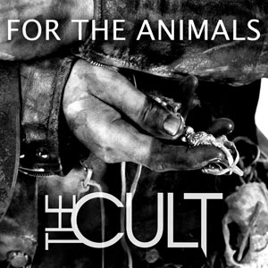 Watch New Cult Video For The Animals